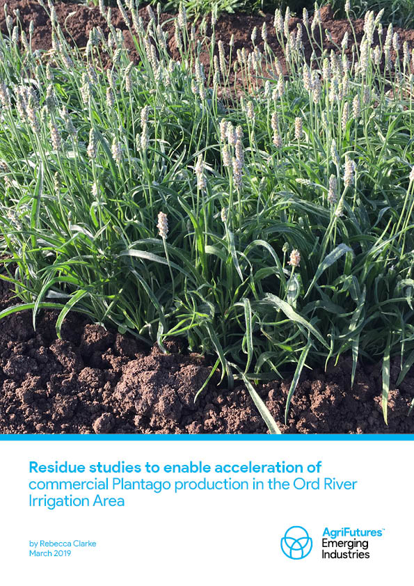 Residue studies to enable acceleration of commercial Plantago production in the Ord River Irrigation Area - image