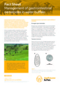 Fact sheet: Management of gastrointestinal nematodes in water buffalo - image