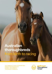 Australian thoroughbreds  from birth to racing - image
