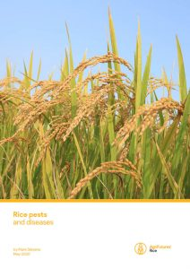 Rice pests and disease - image