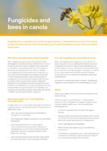 Fungicides and bees in canola - image