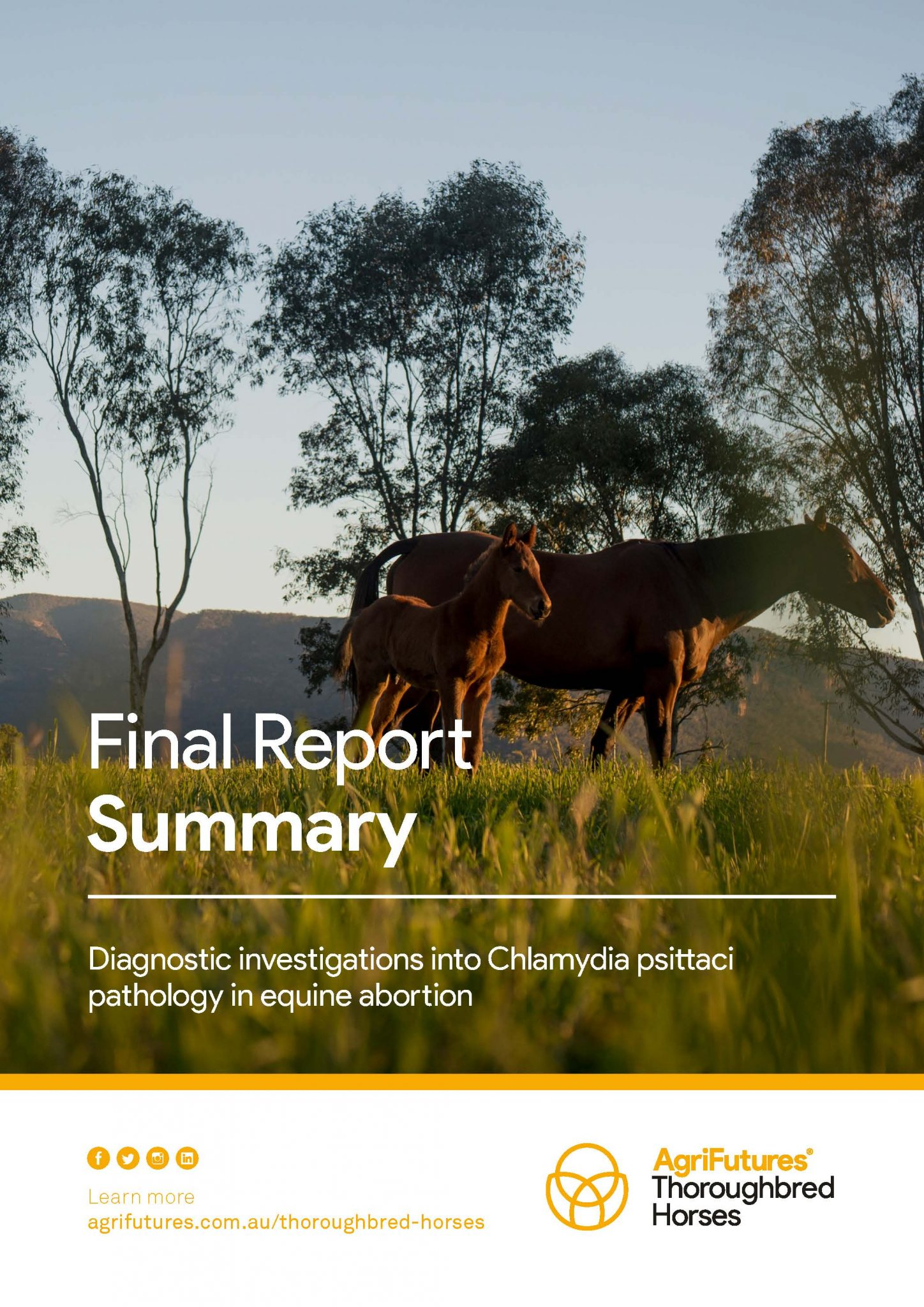 Final Report Summary: Diagnostic investigations into Chlamydia psittaci pathology in equine abortion - image