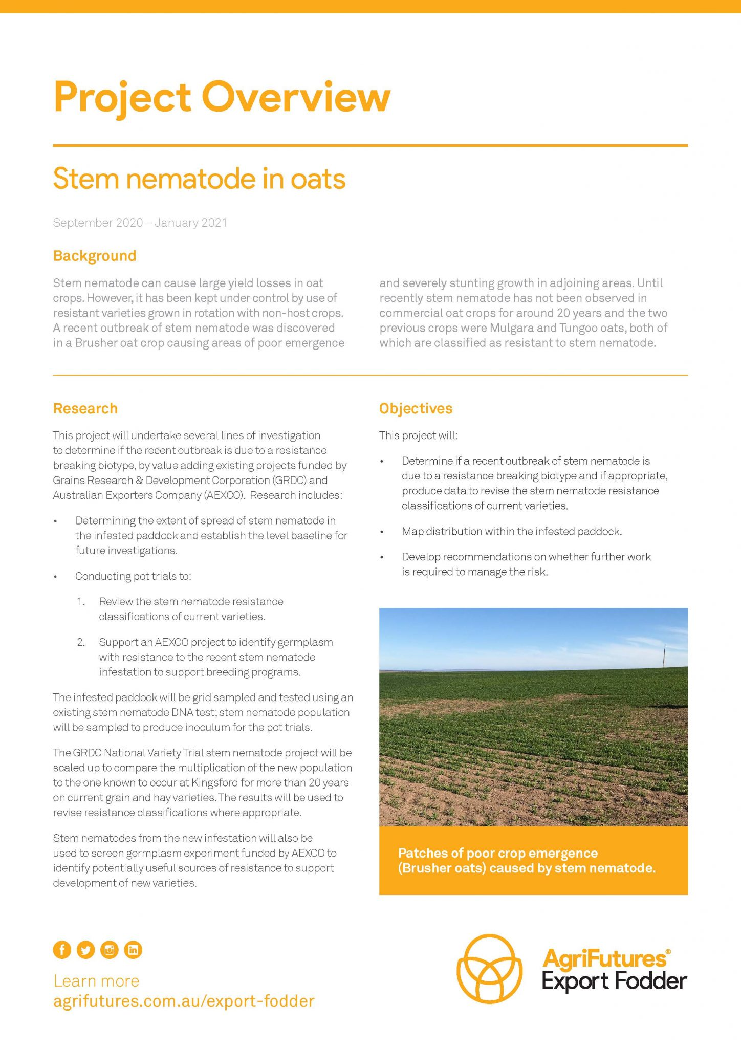 Project overview: Stem nematode in oats - image