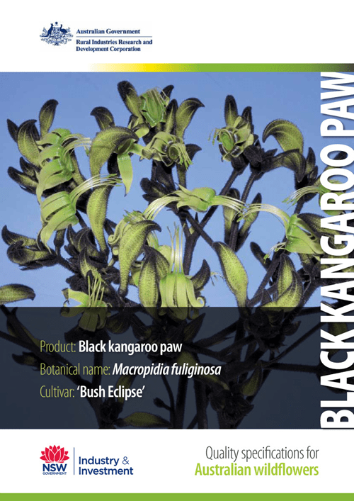 Quality Specifications for Black Kangaroo Paw - image