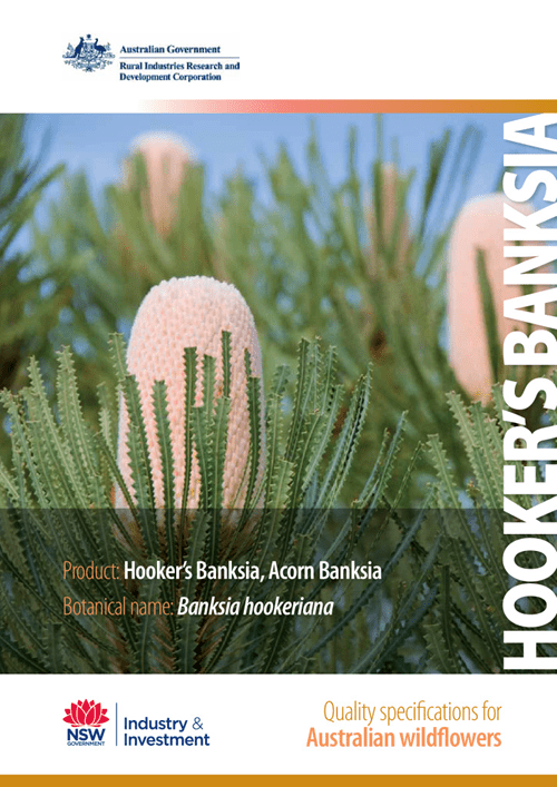 Quality Specifications for Hooker's Banksia - image