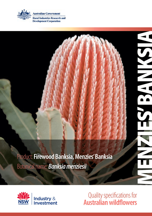 Quality Specifications for Menzies' Banksia - image