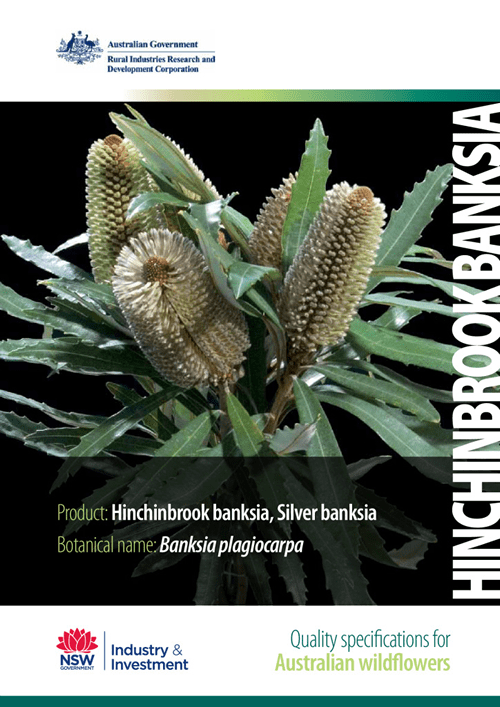Quality Specifications for Hinchinbrook Banksia - image