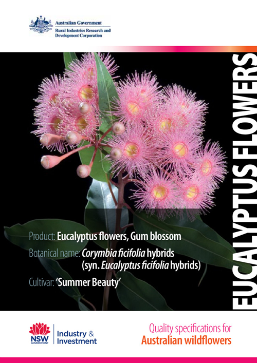 Quality Specifications for Eucalyptus Flowers - image