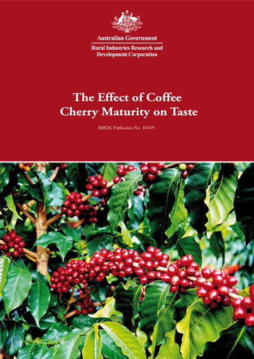 The Effect of Coffee Cherry Maturity on Taste - image