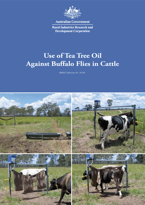 Use of Tea Tree Oil Against Buffalo Flies in Cattle - image