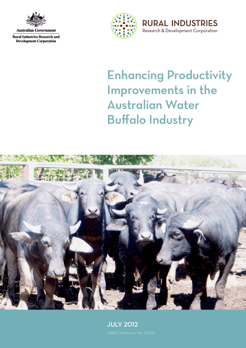 Enhancing Productivity Improvements in the Australian Water Buffalo Industry - image