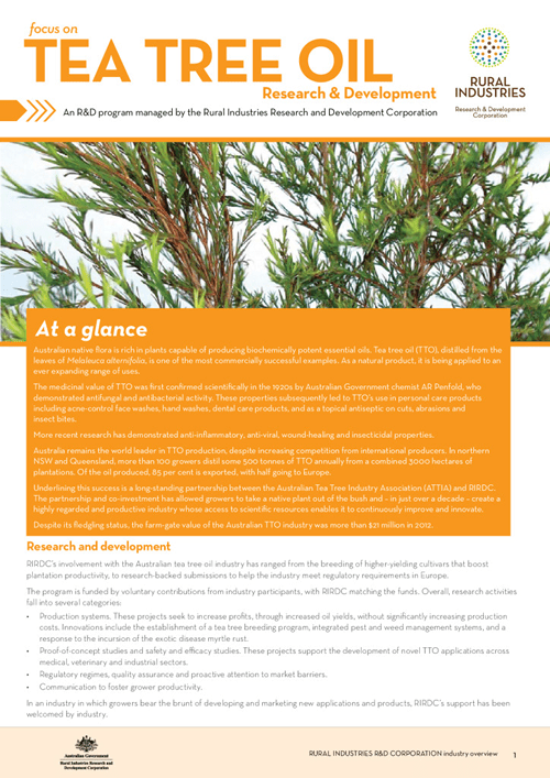 Focus on Tea Tree Oil Research and Development - image